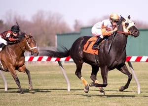 Nice 'n' easy does it for Ben's Cat as he wins his fourth straight Mr. Diz. Photo by Jim McCue, Maryland Jockey Club.