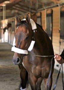 Hall of Famer Mike Smith will pilot Game on Dude in the Charles Town Classic.  Photo by Coady Photography.