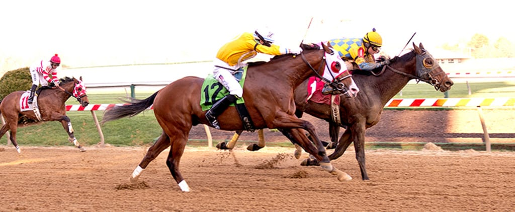 Spicer Cub rallies furiously after bolting in a Pimlico maiden race in April 2013. Photo by Jim McCue, Maryland Jockey Club.