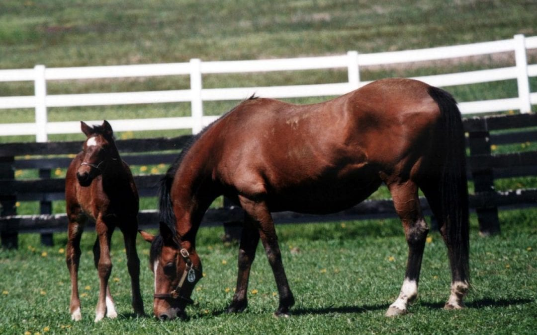 Pennsylvania Thoroughbred industry could get boost from new law