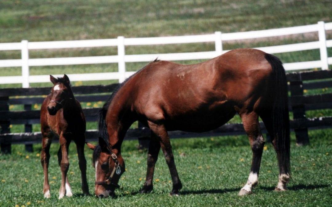 Jockey Club predicts further declines in foal crop size
