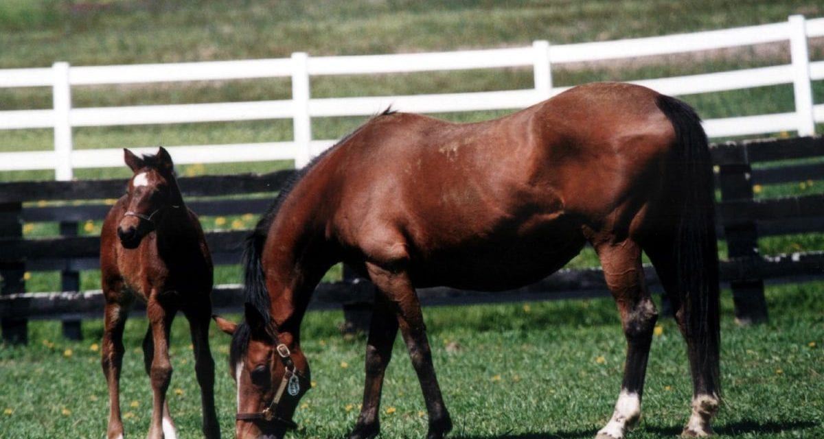 """A lot of jobs at stake"" in Pennsylvania breeding, racing industries"