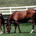 Harrison named president of Maryland Horse Breeders Association