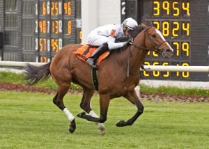 General Election, ranked seventh on the Turf 10,  takes the Arlington Classic..  Photo by Four-footed Photos.