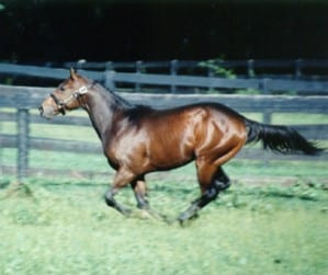 Malibu Moon in his Country Life Farm days.  Photo by Ellen Pons.