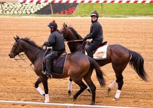 In this photo released by the Maryland Jockey Club, Orb, with exercise rider Jenn Patterson aboard, jogged at Pimlico Race Course on Wednesday, May 15 in preparation for Saturday's $1 million Preakness Stakes (G1). (Maryland Jockey Club, Jim McCue)