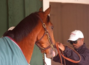 Goldencents and rider Kevin Krigger map out their Preakness strategy.  Photo, Maryland Jockey Club.