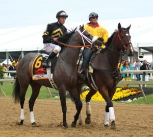 Oxbow, and Gary Stevens' game face.  Photo by Laurie Asseo.