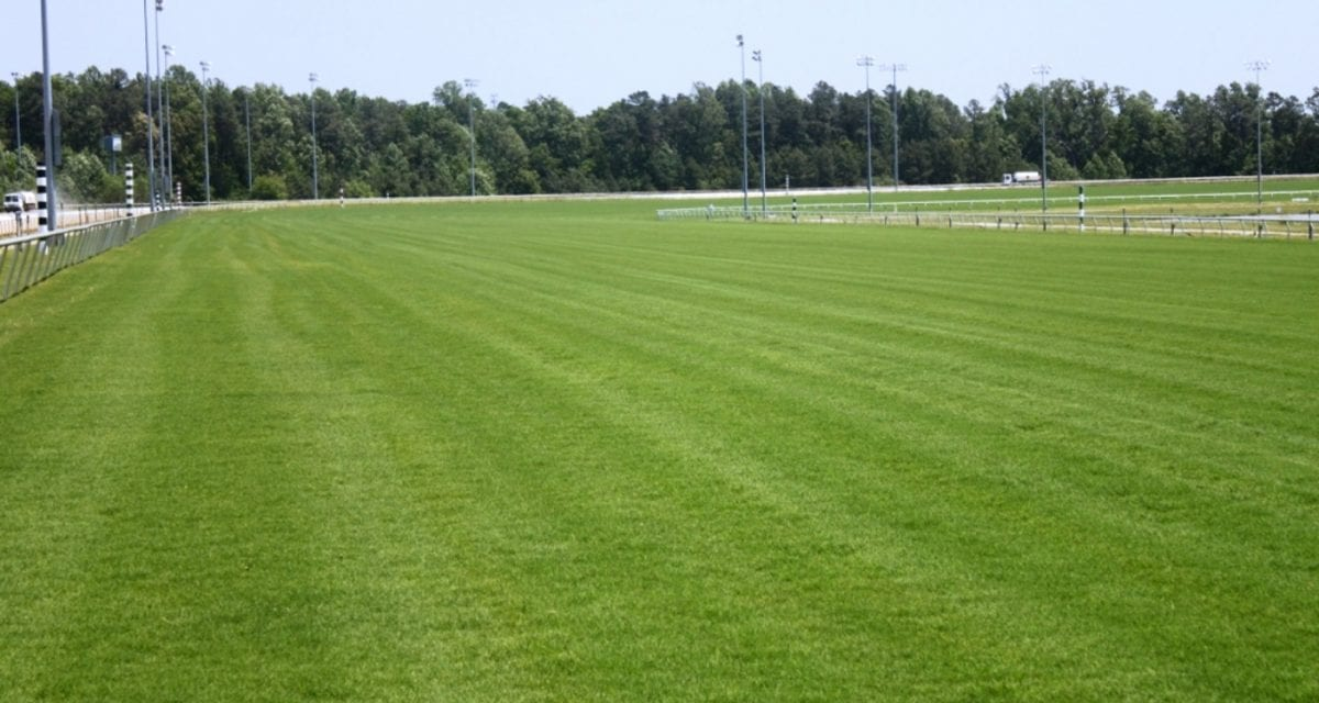 At Colonial Downs, both turf and horses coming in nicely
