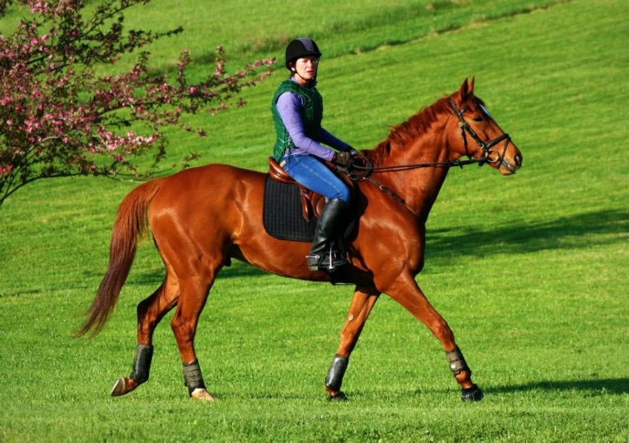 Application period for Thoroughbred Makeover opens