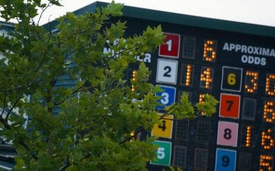 Wagering handle flat despite fewer racedays