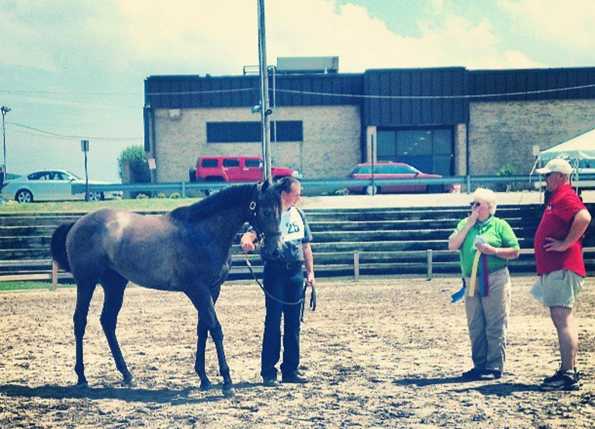 Sagamore filly and Outflanker star in MHBA Yearling Show