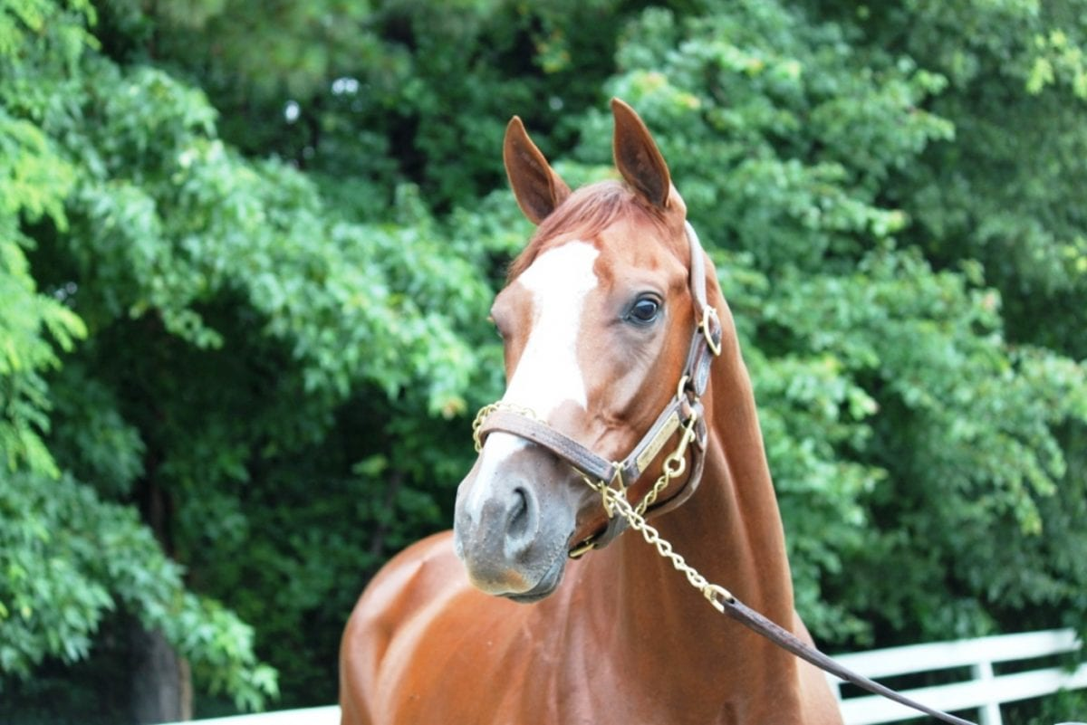 Nick's Picks: Va. Derby winner figures to come from the group within the group