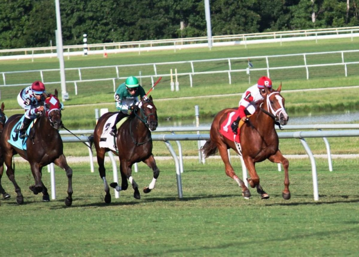 Virginia Thoroughbred Association gets back to the farm