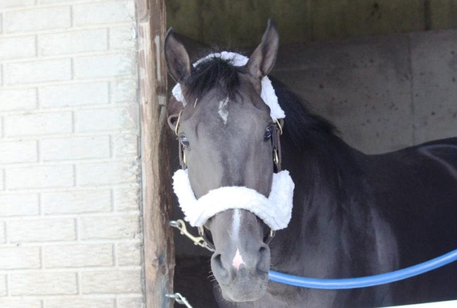 Virginia Derby features four of Hahn's Turf 10