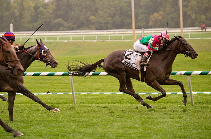 Tricky Hat tops Laurel Turf Cup field
