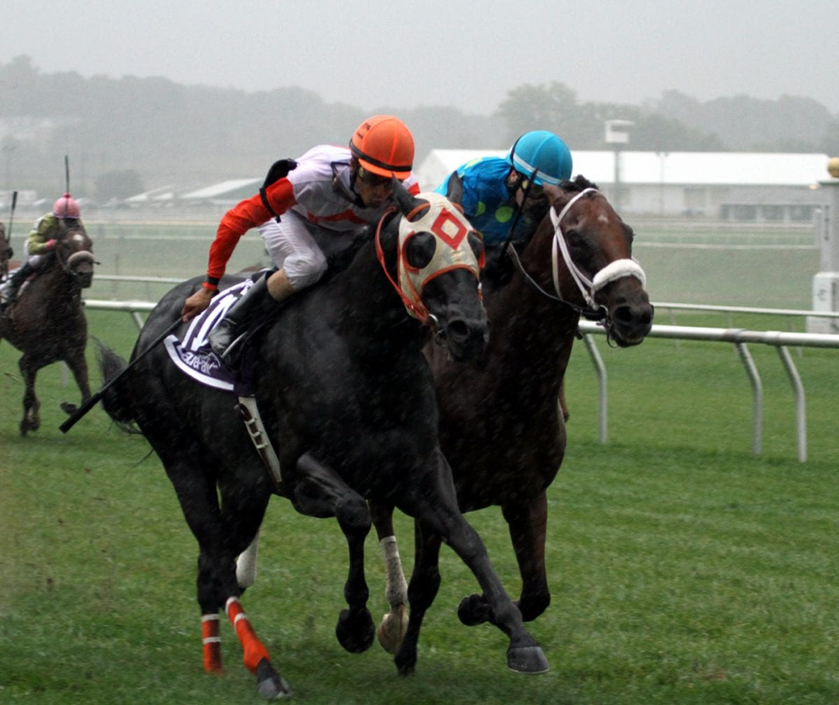 Gallery: Ben's Cat wins the Laurel Dash