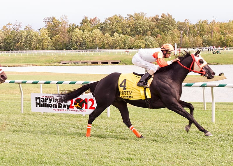 Maryland Million notebook: Ben's Cat heads to the Turf