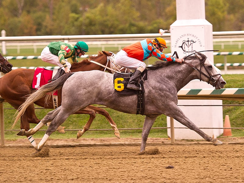 Mezzano is much the best in Laurel Park feature