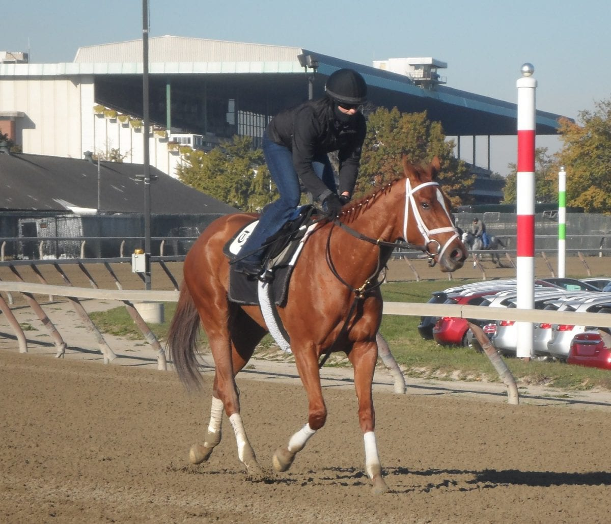 One exercise rider, with two big chances in the Breeders' Cup