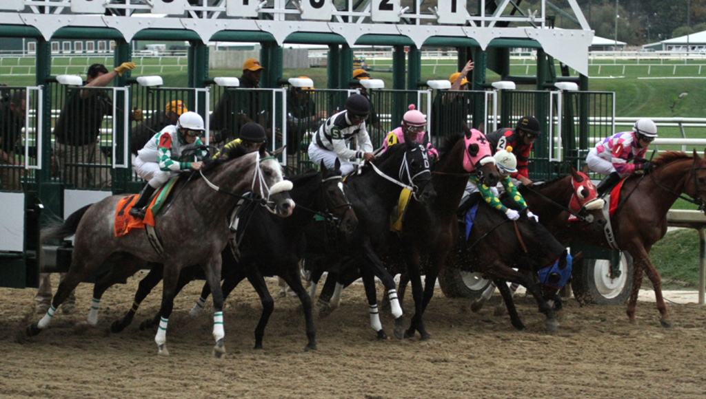 The break from the gate can be crucial in a race. Note the 3-horse stumbling here. Photo by Laurie Asseo.
