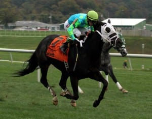 Monster Sleeping wins the 2013 Maryland Million Ladies. Photo by Laurie Asseo.