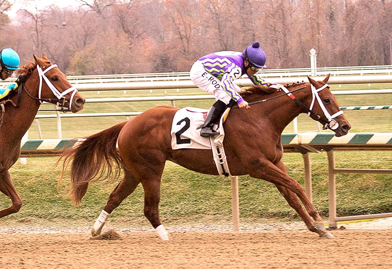 Bacopa Breeze blows to Smart Halo victory