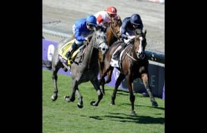 West Virginia-bred Giovanni Boldini, inside with white blaze, slugs it out with Outstrip in the Breeders' Cup Juvenile Turf.  Photo by Gary Mook, Breeders' Cup Ltd.