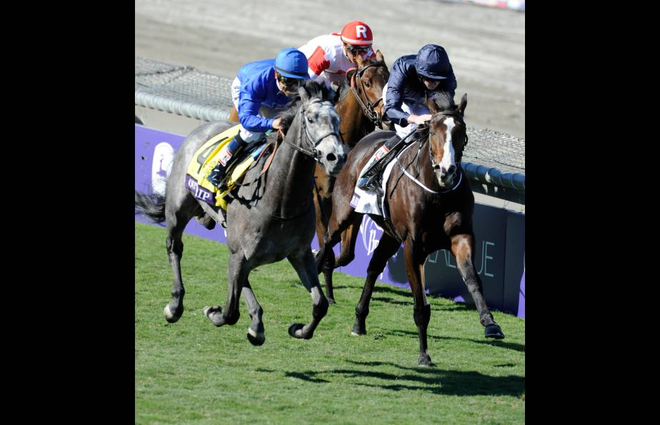Blueskiesnrainbows, top older horse in Midlantic-bred Poll, falters