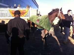 Lady Sabelia heads home after winning the Safely Kept Stakes on November 9, 2013. Photo by The Racing Biz.