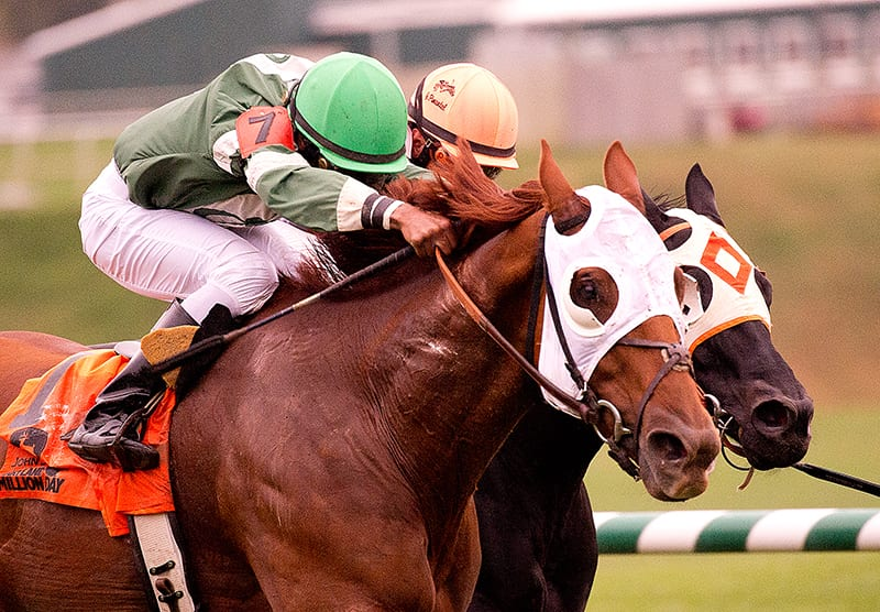 Four stakes highlight Laurel Park's Saturday card, including rugged City of Laurel