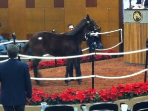 Hip 206, a Kitten's Joy colt who brought a high bid of $92,000, struts his stuff in the ring.