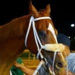 """With first Lucy's Bob Boy Stakes, memories, and """"what ifs"""""""
