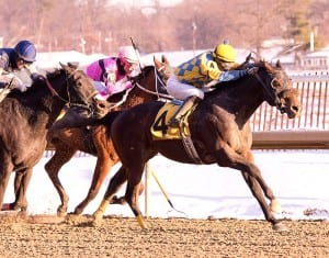 Broad Rule.  Photo by Jim McCue, Maryland Jockey Club.