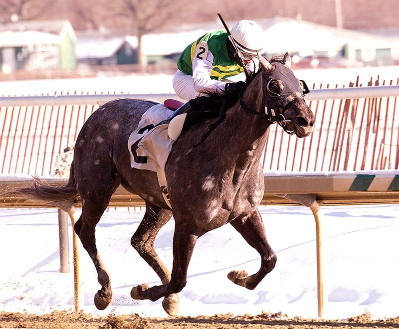 Gracer posts popular Marshua win at Laurel Park