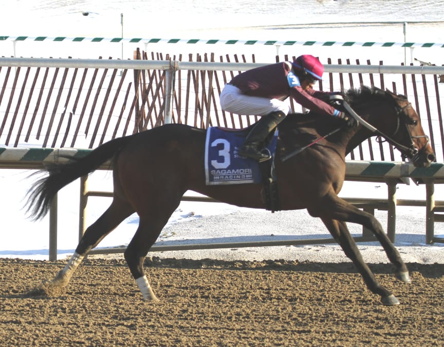 In-form Bold Curlin sweeps to Native Dancer victory