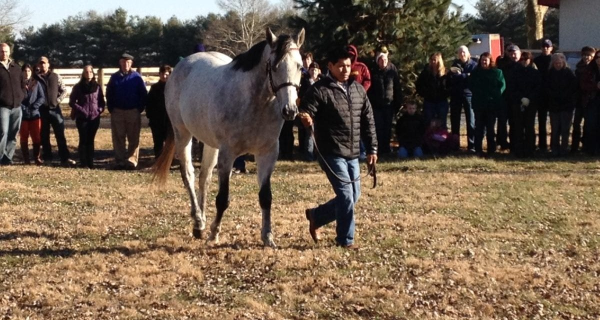 Virginia Thoroughbred Association aims for its best stallion season auction