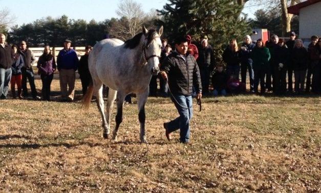 Heritage Stallions partners to split