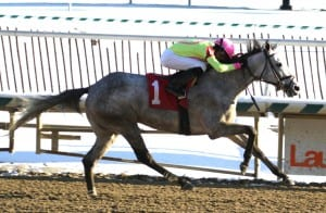 Firenze Feeling wins the Nellie Morse, Victor Carrasco's first stake win.  Photo by Laurie Asseo.