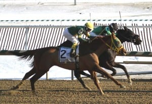 Indian Jones (#2), rallied to be second in the Native Dancer. Photo by Laurie Asseo.