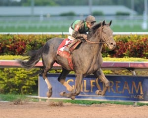Virginia-bred Just Call Kenny and New Jersey-based Joe Bravo upset the Spectacular Bid on Saturday at Gulfstream.  Photo Lauren King.