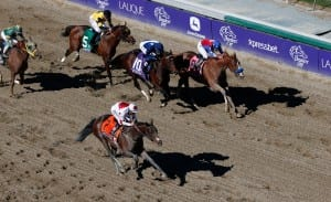 London Bridge with Mike Smith aboard wins the $500,000 Breeders' Cup Marathon.  Photo by © Breeders' Cup/Todd Buchanan 2013.