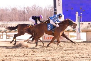 No irons, no problem for Trevor McCarthy, winning aboard Chi Chi's Pride.  Photo by Jim McCue, Maryland Jockey Club.