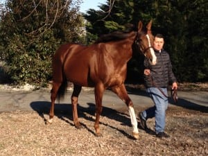 Plan, a son of Storm Cat, won nearly $200,000 in his brief racing career.  Photo by The Racing Biz.