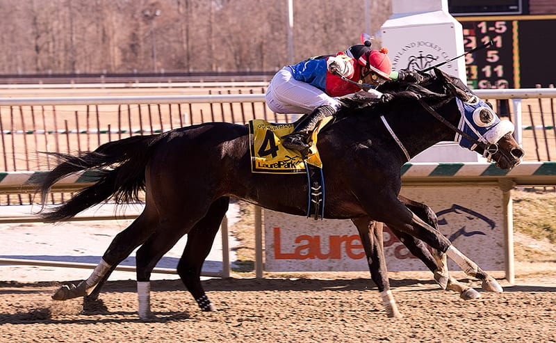 Behemoth runs big to win the John B. Campbell Handicap