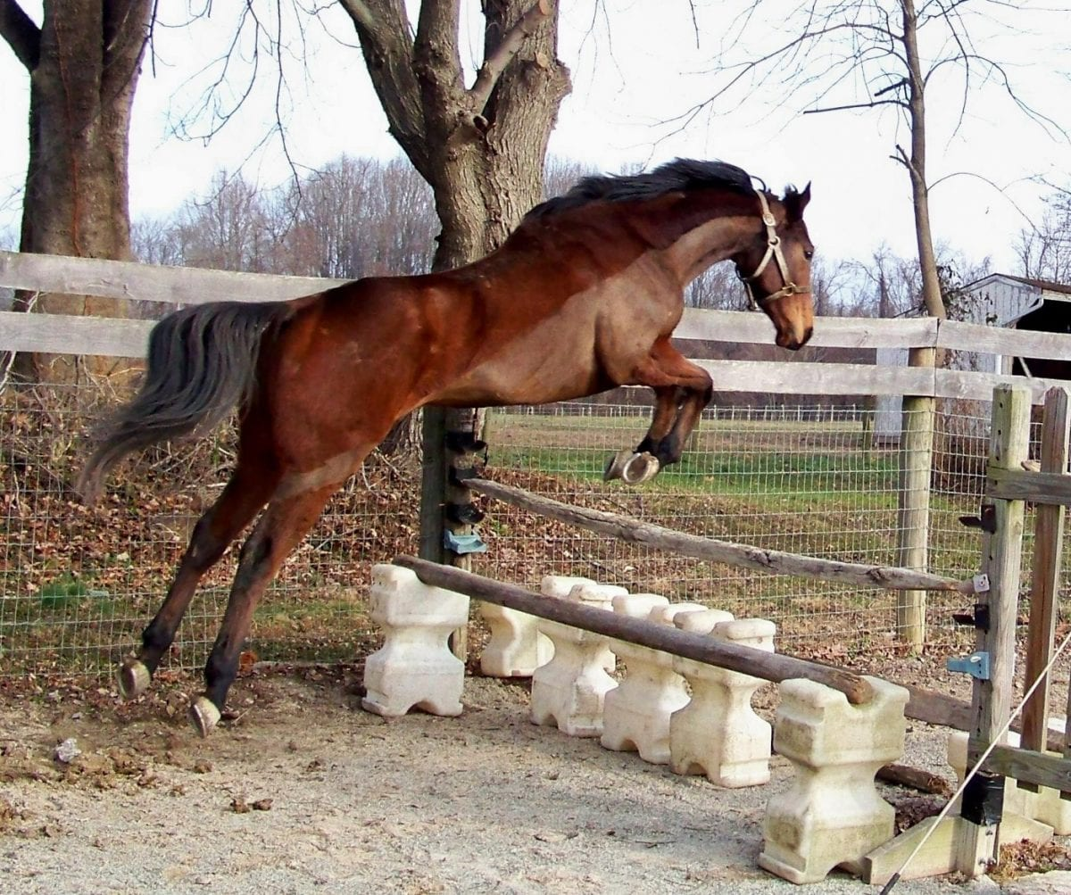 X marks the spot for this retired Thoroughbred