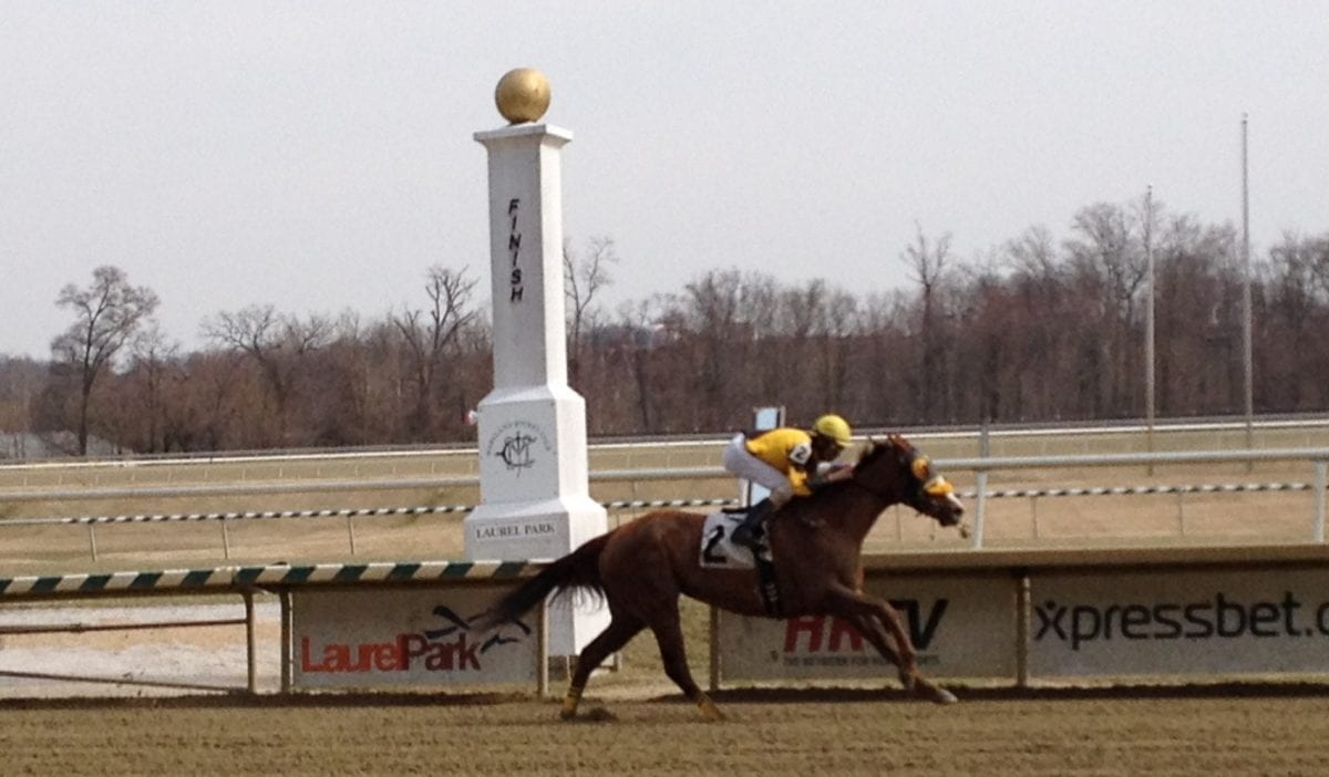 My Pal Chrisy tops crowded Sugar Maple Stakes