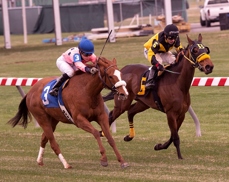 Embarr repeats in Dahlia Stakes