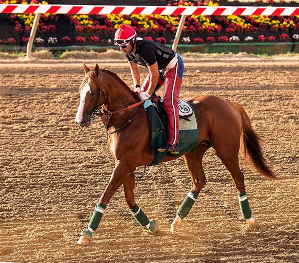 All systems go for California Chrome