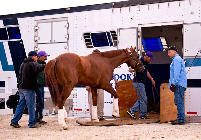 California Chrome heads to Belmont